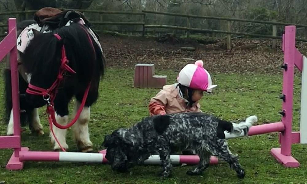 f6c35a1294 A tündéri kislány és pónija megmutatják, hogy együtt a nehéznek tűnő  akadályon is könnyebb átlendülni
